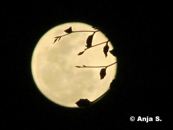 Mond – 8. September 2014